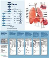 Spirometry Reference Chart WEL71038-3000